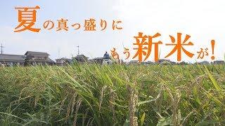 【webアミンチュNews】夏の真っ盛りに稲を刈る!