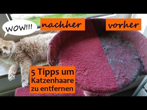 🔥Katzenhaare entfernen auf Sofa, Kleidung, Teppich usw. einfach und effektiv - Die besten 5 Tipps!