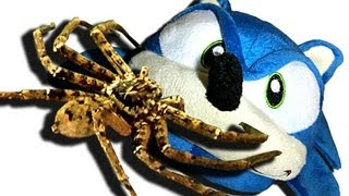 Big Spider Sonic Slipper Knockout Dyson DC35 Capture Slowmo