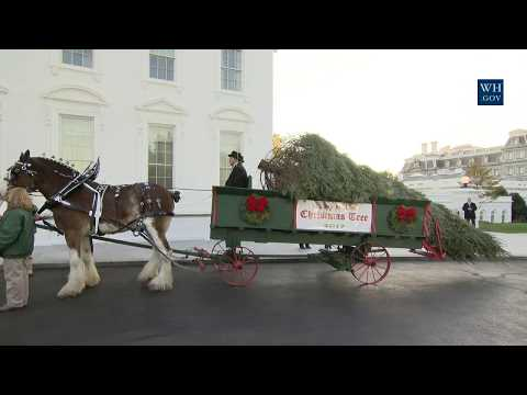 The First Lady Receives the 2017 White House Christmas Tree