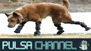TOP 10 Animales a Los Que Les Salvó la vida una impresora 3D