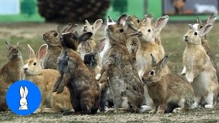 Bunny Rabbit Island Japan - CUTEST Compilation