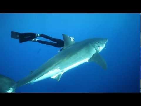 צוללת עם כרישים - צילום מדהים!