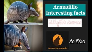 Armadillo//Interesting facts// life of armadillo// nature and behaviour//Nature's Encyclopedia