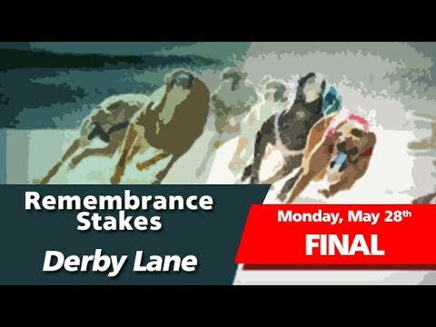 Derby Lane 2018 Remembrance Stake