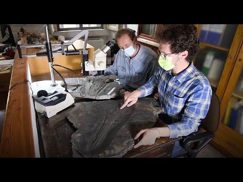La scoperta del Besanosauro raccontata dai paleontologi