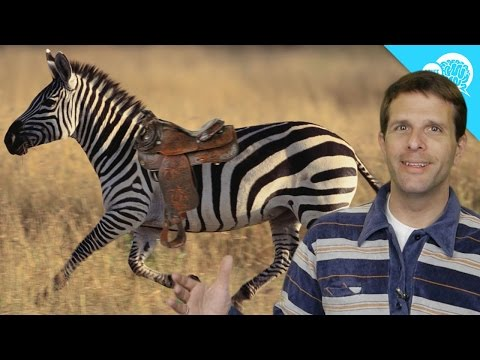 mp4 Training Zebra, download Training Zebra video klip Training Zebra