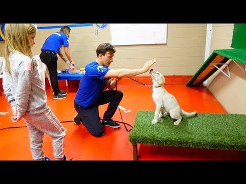 Едем с Николь к САМОМУ КРУТОМУ Тренеру по дрессировке Собак в Лос Анджелесе ! Как научить щенка ?