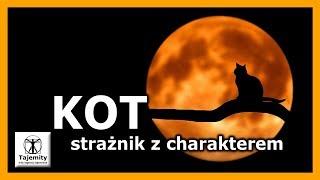 Kot – strażnik z charakterem