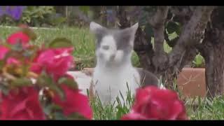 Смешные приколы с кошками  Коты и кошки  Собрание лучших видео о кошках  Лучшие приколы про котов