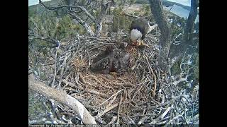 Big Bear Eagles - Beautiful, sweet eaglets - 03-20-18