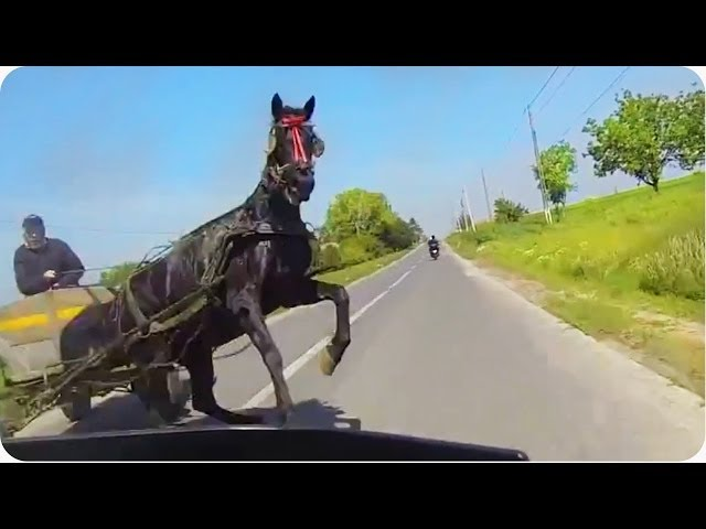 حصان كاد أن يودي بحياة قائد دراجة نارية