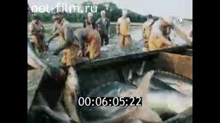 Рыболовная база астраханская область икрянинский район