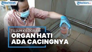 7 Kilogram Hati Sapi Mengandung Cacing Ditemukan di Tempat Pemotongan Pasar Rebo