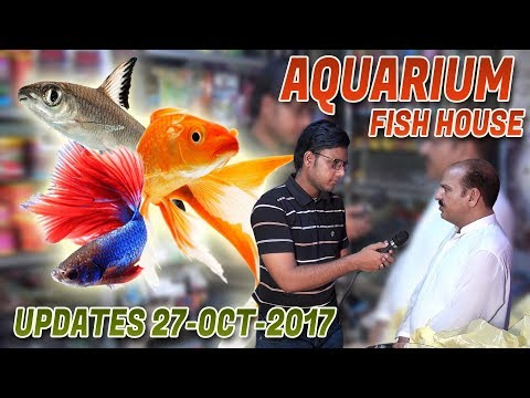 Aquarium Fish House Updates 27-Oct-2017 Jamshed Asmi Informative Channel In (Urdu/Hindi)