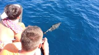 preview picture of video 'Dolphin Surfing @ Gan,Maldives'