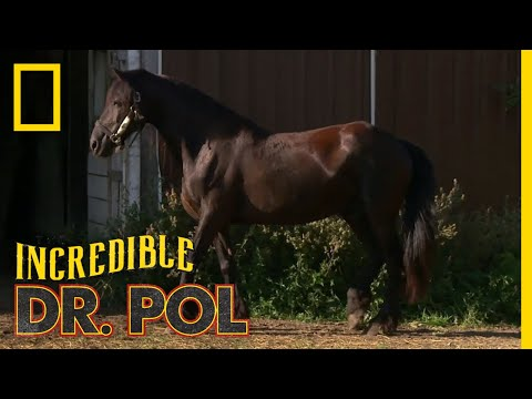 Horse Hoof Problems | The Incredible Dr. Pol