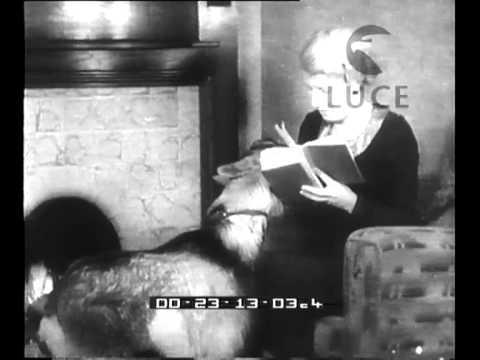 Massaggio sesso video HD
