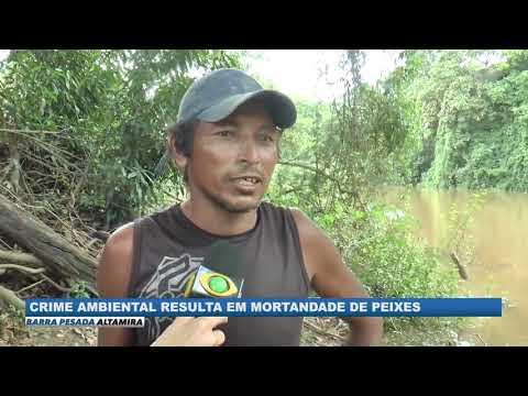 CRIME AMBIENTAL: MORTALIDADE DE PEIXES EM ANAPU