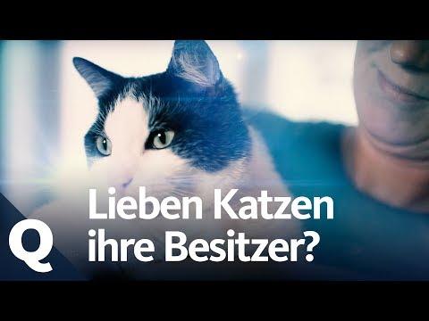 Experiment: Mají nás kočky rády?
