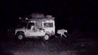 Ranger uses roar to scare off lions | Desert Lions | BBC Earth