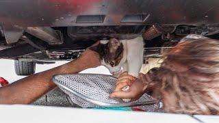 Poes Delphi bevrijdt uit motorruimte auto