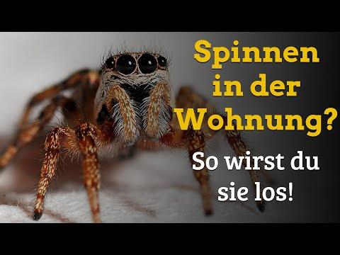 Warum Spinnen in die Wohnung kommen und was man dagegen tun kann - Genial Einfach