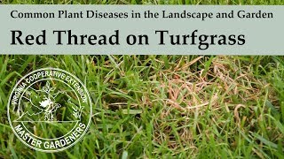 Red Thread - Common Plant Diseases in the Landscape and Garden