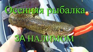 Ловля налима осенью в иркутской области