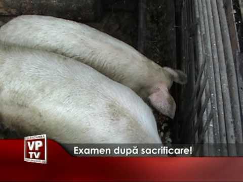 Examen după sacrificare!