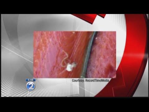 Castor worm review