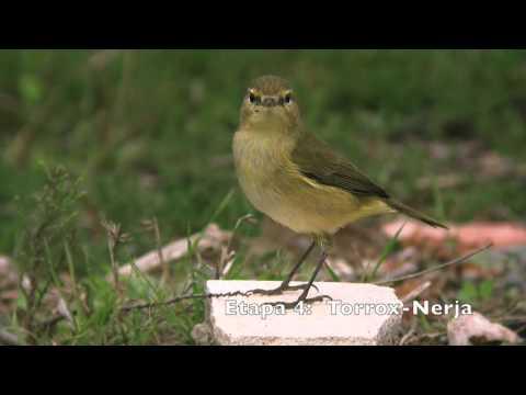 Vögel des Großen Weg von Malaga (GR 249). Die Schritte 1 bis 9