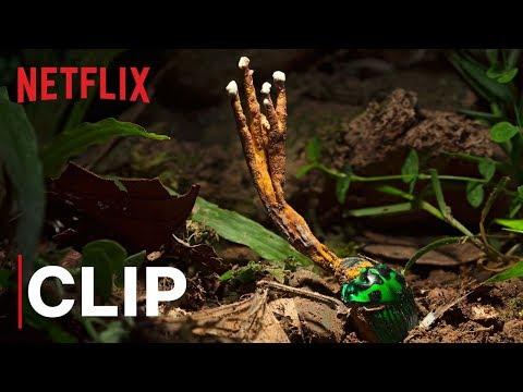 Vražedné houby z pralesa
