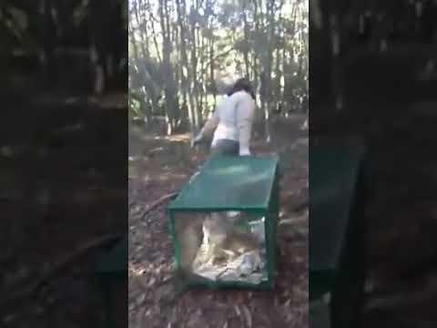 Así liberaron a un zorro que tenían atado con cadena en una casa de Magdalena