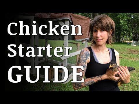 , title : 'Beginners Guide To Raising BACKYARD CHICKENS