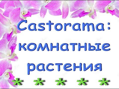 Castorama:КОМНАТНЫЕ РАСТЕНИЯ,01.04.21.Касторама,Самара.