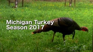 Michigan Turkey Season 2017