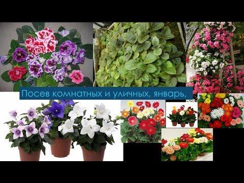 Цветы, посев, комнатные и уличные.