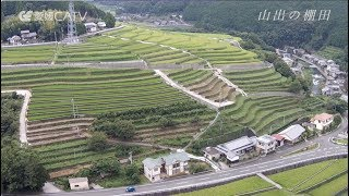山出の棚田(愛媛県愛南町)Terraced Paddy Field In Yamaidashi [Japan, Ainan Town, Ehime Prefecture]