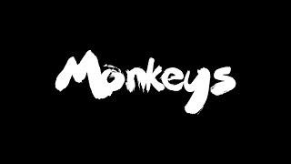 Monkeys - Timelapse - Video Youtube