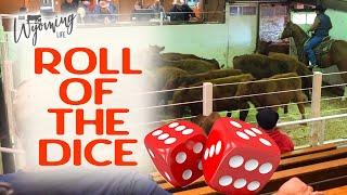 Sale Day 2020 - Calves go to Auction