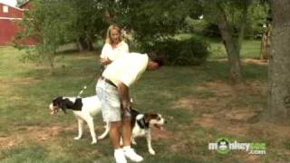 Dog Training - How to Introduce Dogs to Each Other