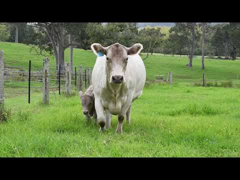GLENLIAM FARM ELIZABETH J14 (PB)
