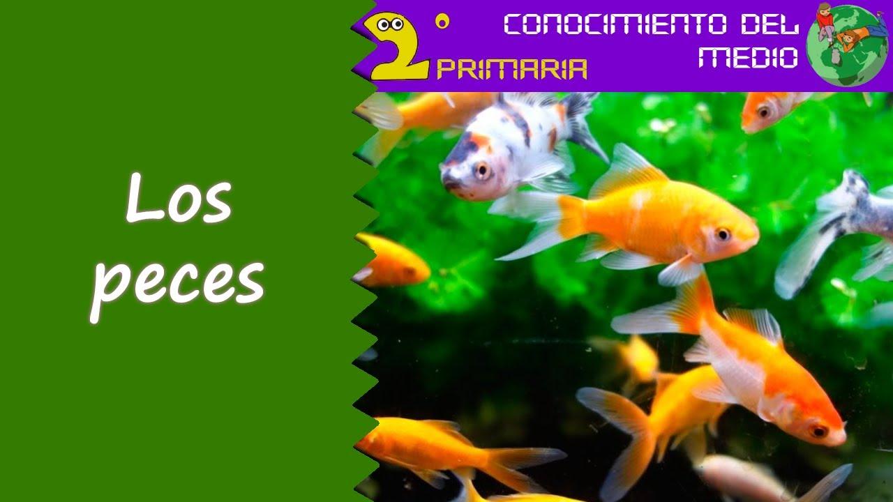Cono, 2º Primaria. Tema 5. Los peces