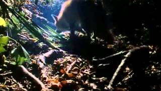 Talk Talk - Life's What You Make It Official Music Video