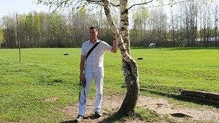 Отчего так в России березы шумят | Экопарк «Авангард»