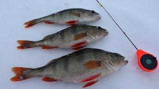 Рыбалка на крупного окуня в апреле 2020