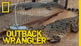 Two Crocs, One Trap | Outback Wrangler