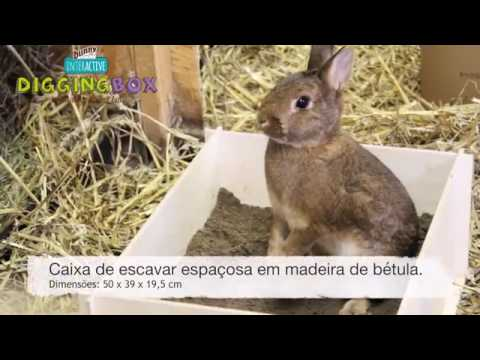 Bunny Caixa Interativa Gigging Box
