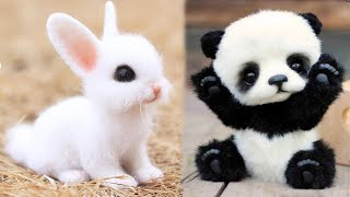 AWW Animals SOO Cute! Cute baby animals Videos Compilation cute moment of the animals #7